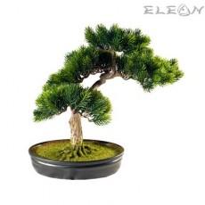 Декоративно дърво благороден Бонсай HN26 - 41см