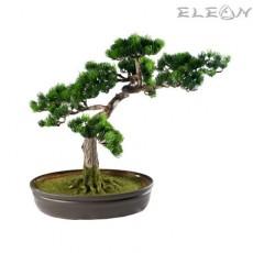 Декоративно дърво Японски Бор HN09 - 40см